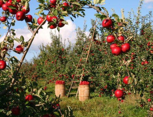 Nueva Guía Sectorial EMAS en el sector agrícola