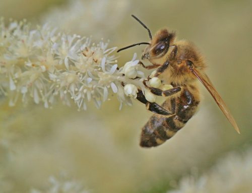 Prohibición de la UE del uso en el exterior de 3 insecticidas peligrosos para las abejas